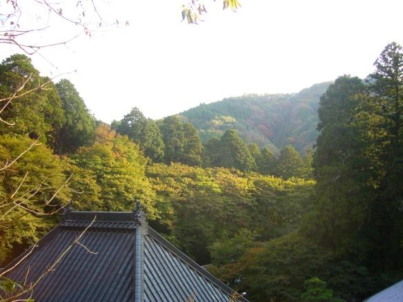 Autumn leaves, Asuke in Toyota City