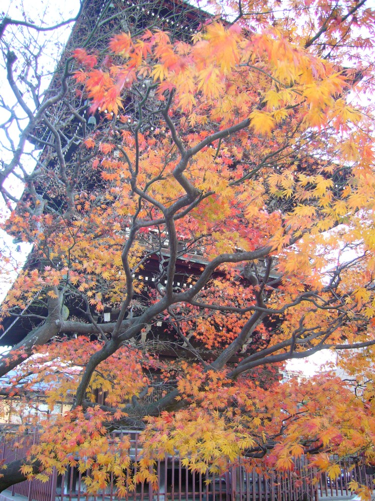 Red maple leaves in a temple in Takayama