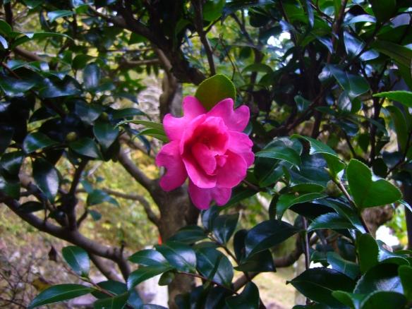 Flower at Kojakuji Temple, Asuke, Toyota City, Japan