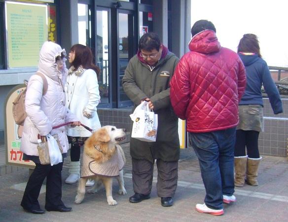 dog in a coat