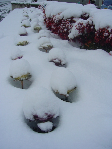 A lot of snow in Toyota City, Japan