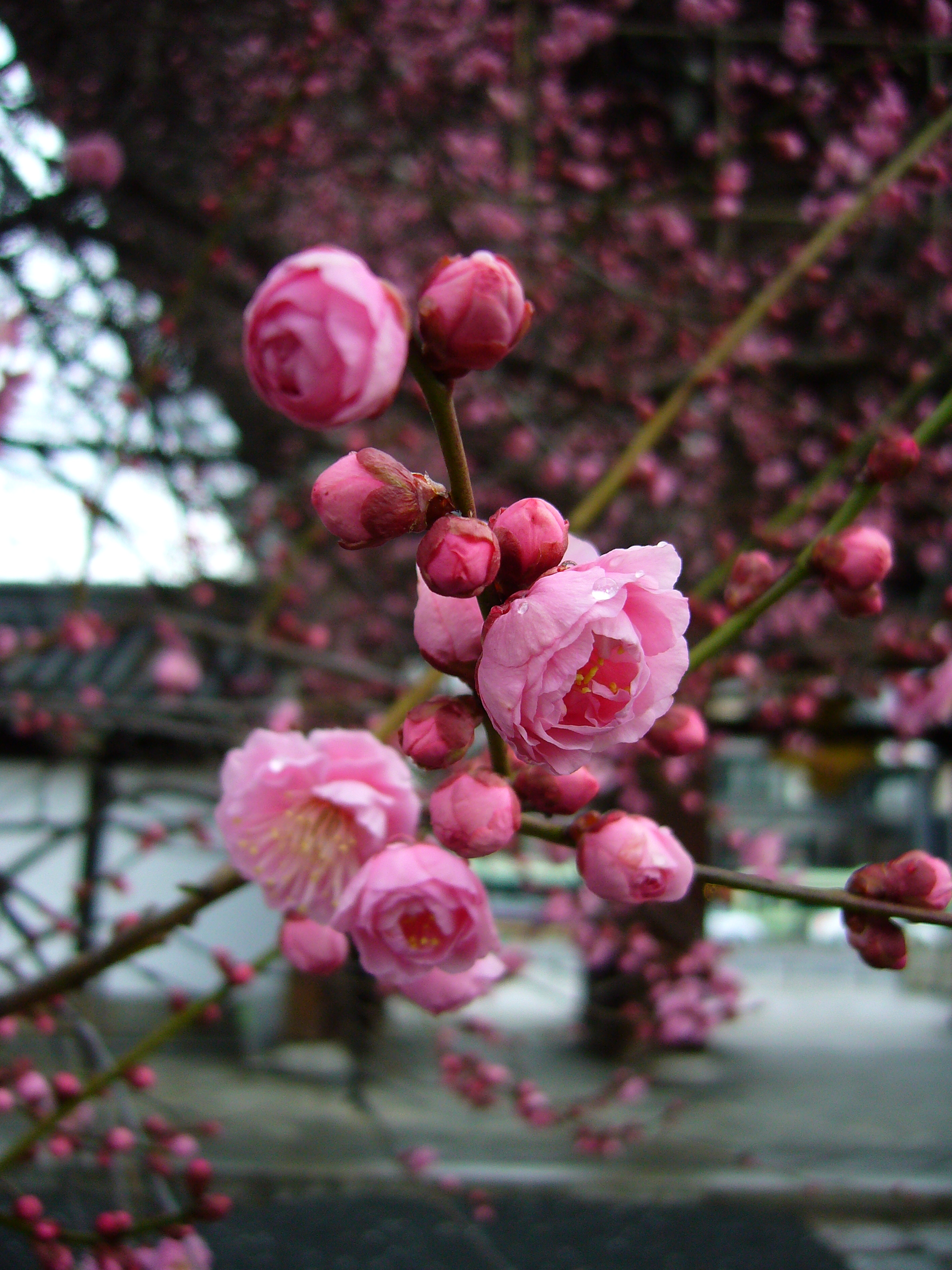 Spring is in the air | The Japans