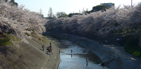 Sakura and children playing in Japan