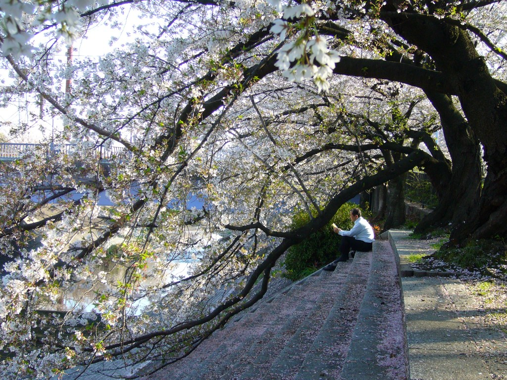 Sakura salaryman escaping modern life