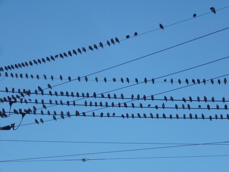 Muku birds