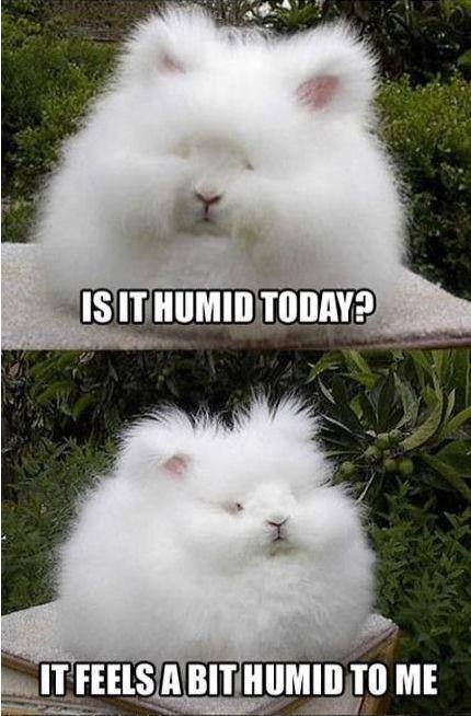 Humidity in Nagoya leads to a never-ending bad hair day