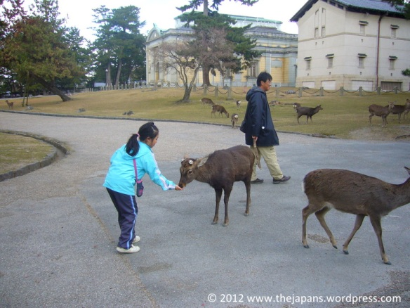 Nara deer everywhere