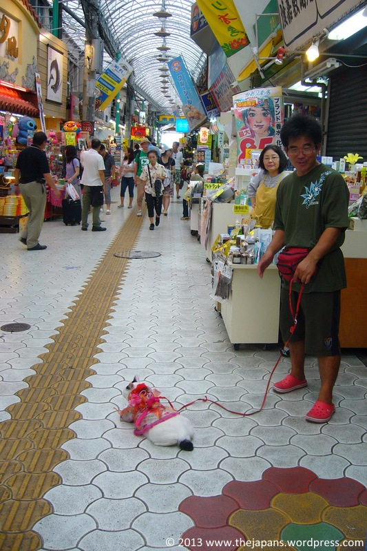 Cat on a leash in Japan
