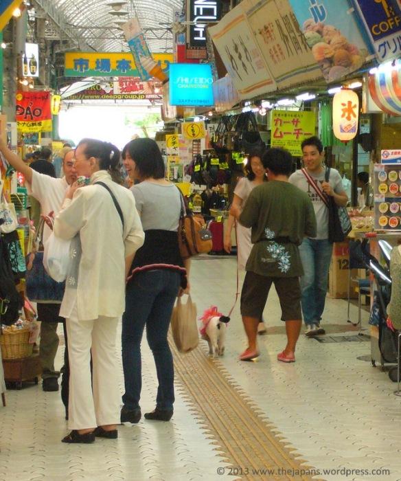 Cat walking on a leash in Okinawa, Japan
