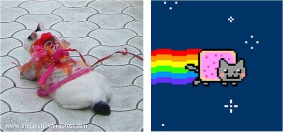Poor Nyan Cat