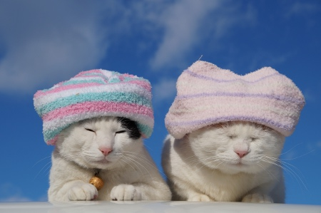 Cats with towels on their heads