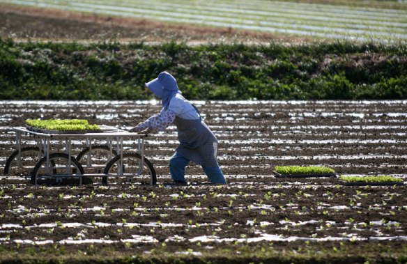 Farmer woman working the land in Japan