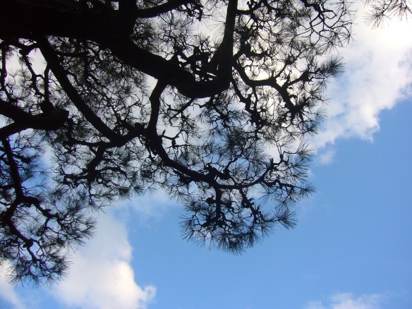 Japanese sky and pine tree at Korankei gorge in Toyota City