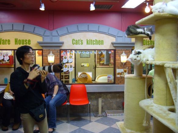 cat café in japan: camera