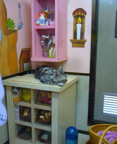 cat café in japan: cute decor
