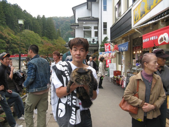 docile Japanese cats